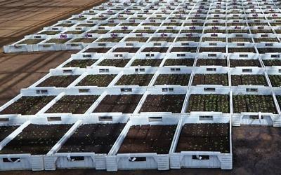 Jó hír a mezőgazdaságban dolgozók számára