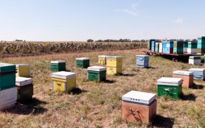 Hogyan kezdjük el a méhészkedést? Agrár pályázatírás