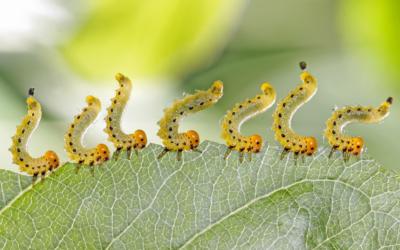 A növények örök ellenségei: a kártevők – védjük meg a terményeket!